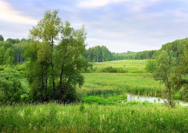 Foreste e campi estivi sotto il cielo blu nuvoloso del mattino regione di novosibirsk