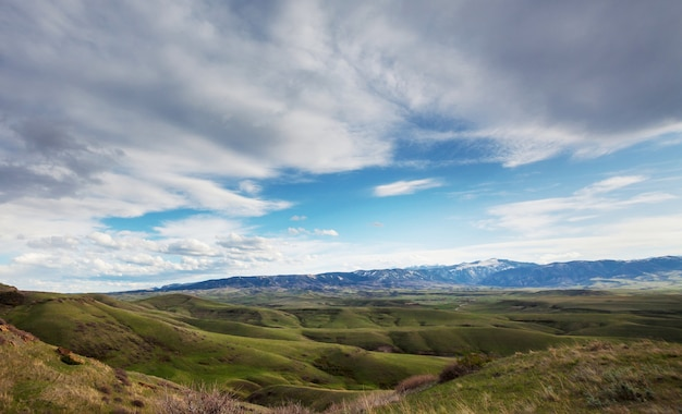 Colline verdi estive in montagne paesaggio forestale bella natura estiva bosco deserto