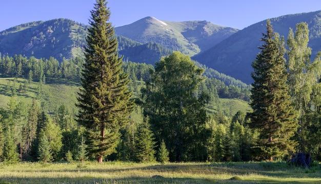 Paesaggio estivo, foreste e cime montuose