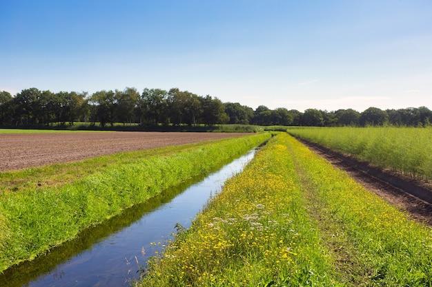Paesaggio estivo nei paesi bassi con prato verde e ruscello calmo