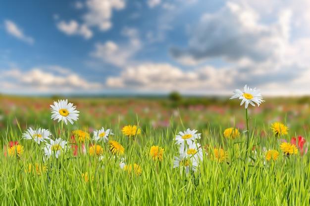 Paesaggio estivo con fiori di camomilla e tarassaco