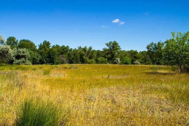 Paesaggio estivo con alberi verdi, prato e cielo blu