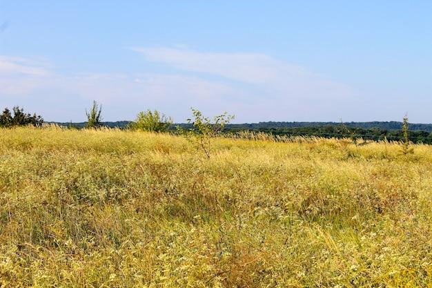 Paesaggio estivo con alberi da prato e colline
