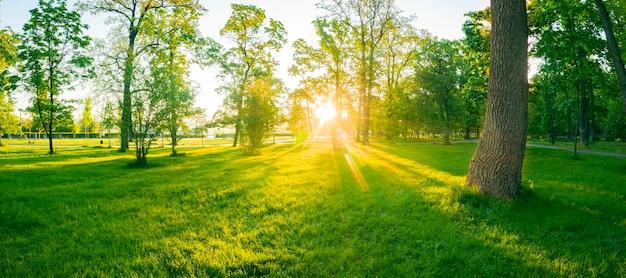 Mattina luminosa magica estiva in un parco verde. l'erba giovane e rigogliosa ei caldi raggi del sole creano un'atmosfera meravigliosa.