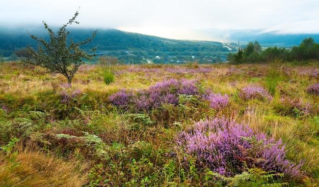 Estate nebbiosa mattina paese pedemontana vista con fiori di erica (oblast di leopoli, ucraina).