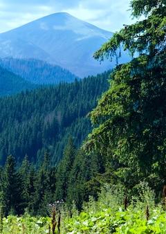 Paesaggio di montagna estivo con grande abete sullo sfondo del monte goverla
