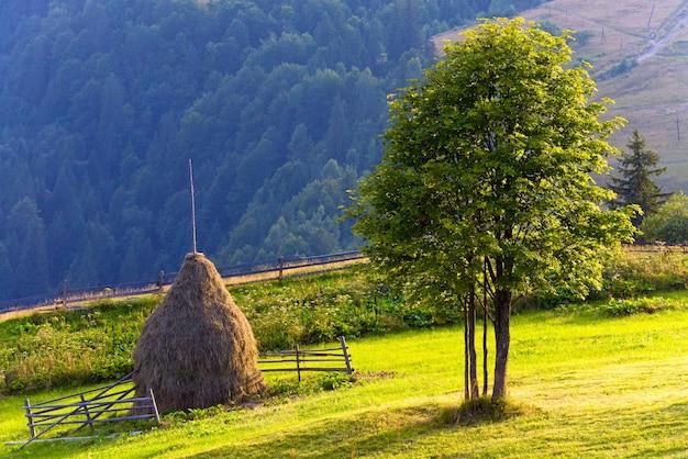 Paesaggio di montagna estivo con pagliaio e albero solitario