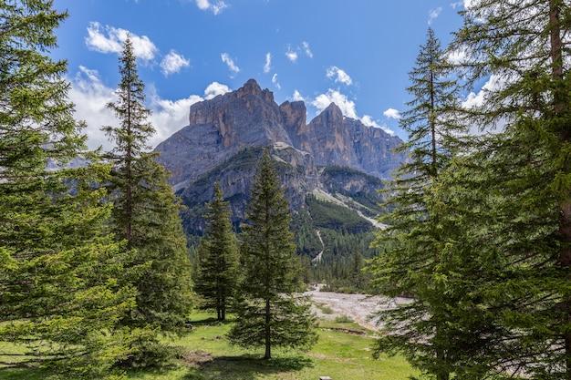 Ruscello di montagna estivo nella foresta delle dolomiti italiane sotto il cielo blu chiaro