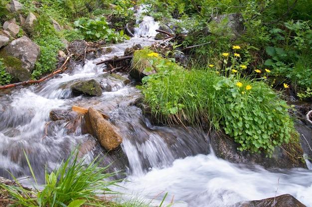 Cascata di montagna estiva tra la vegetazione