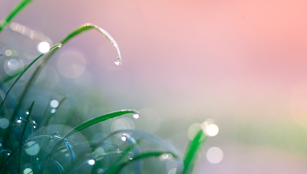 Sfondo naturale estivo, verde giovane e gocce di rugiada dopo la pioggia, messa a fuoco selettiva