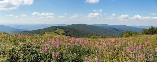 Paesaggio naturale estivo con fiori di campo viola che crescono sulla cima di una collina nel parco nazionale di poloniny