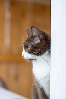 Ritratto di estate di un gatto che cammina lungo una staccionata in legno su uno sfondo di natura. un gattino marrone e bianco cammina lungo una staccionata in legno. un gatto di nome busia. 1