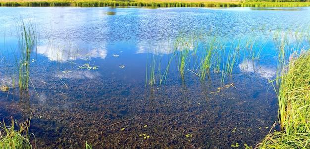 Estate rushy vista panoramica sul lago con riflessi di nuvole.