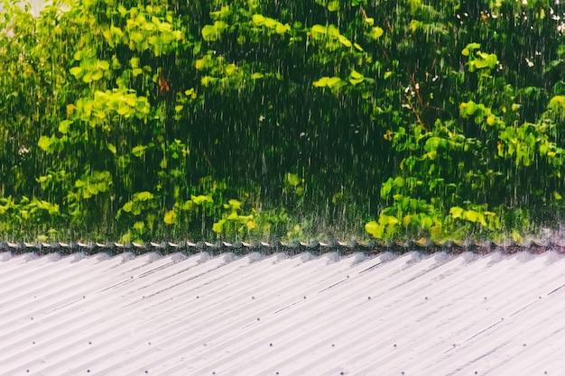 Pioggia estiva o primaverile sullo sfondo del fogliame verde che colpisce il tetto di metallo