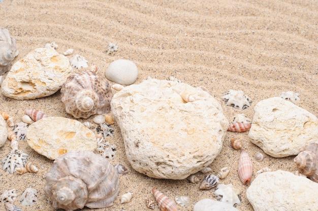 Superficie estiva di conchiglie di pietre di sabbia di mare