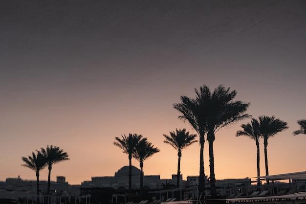 Palme da cocco tropicali estive contro il cielo al tramonto