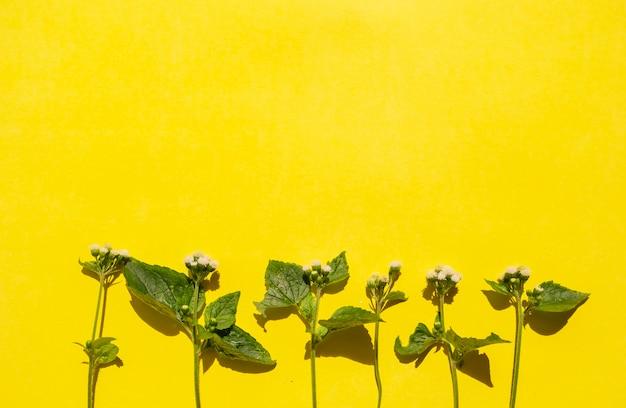 Composizione tropicale estiva. foglie verdi e fiori bianchi su uno sfondo di carta gialla. concetto di estate. foglie verdi e fiori bianchi isolati su sfondo giallo