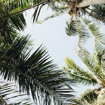 Palme tropicali estive contro il cielo blu. concetto di estate a phuket