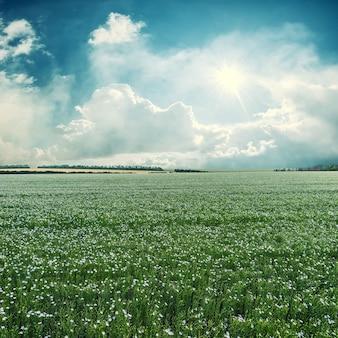 Paesaggio estivo vintage con bellissimo campo di lino, prato di fiori blu. stilizzazione retrò