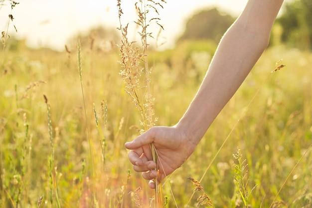 Erba e fiori selvaggi del prato di estate in mano della ragazza, primo piano, natura, ecologia, stagione estiva