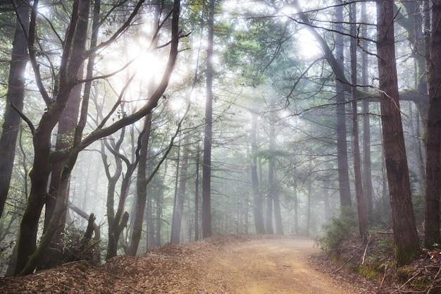 Raggi di sole in una giornata limpida nella foresta verde