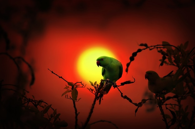 Conuro del sole sul ramo di un albero