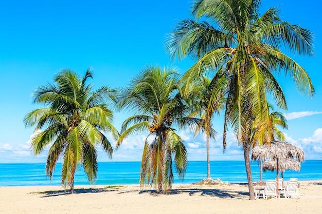 Sedie a sdraio sotto gli ombrelloni di paglia sulla spiaggia sabbiosa con palme vicino all'oceano e al cielo a varadero, cuba