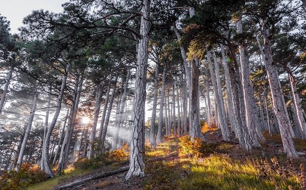 Raggi di sole attraverso gli alberi, foresta d'autunno nelle montagne della crimea