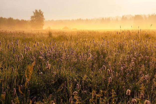 Il sole che sorge su uno scenario naturale nebbioso con molti fiori di campo in fiore