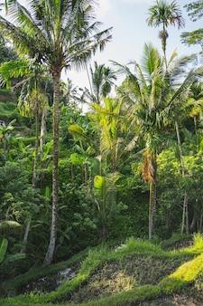 Il sole splende su foglie di palma tropicali verdi, calme giornate estive sull'isola di bali foto stock