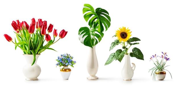 Girasole, monstera, non ti scordar di me, tulipani e fiori di croco nella collezione di vasi retrò isolati su sfondo bianco. regalo di vacanza e concetto di giardino estivo. banner di elementi di design
