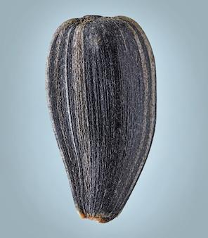 Macro di semi di girasole isolata su sfondo grigio