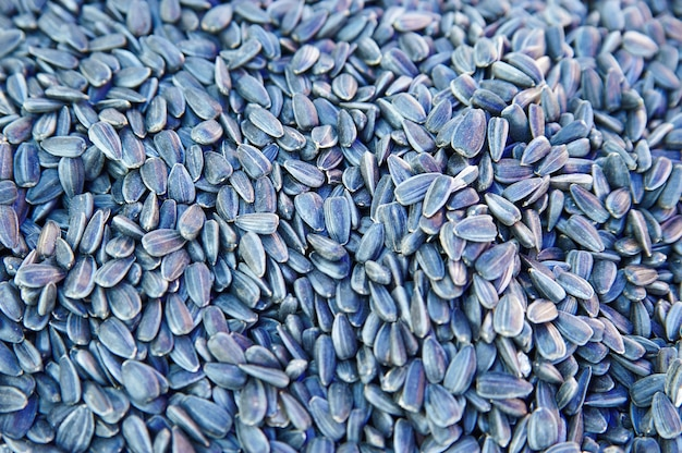 Sfondo di semi di girasole