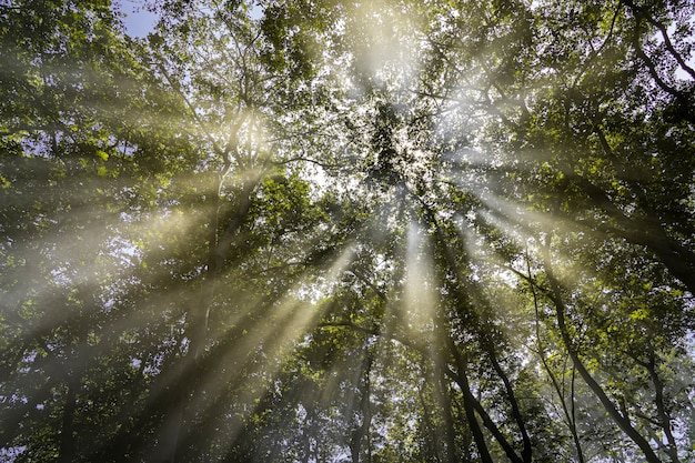 Raggi del sole attraverso i rami e le foglie