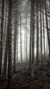 La luce del sole che splende attraverso lo sfondo del telefono cellulare dei boschi nebbiosi