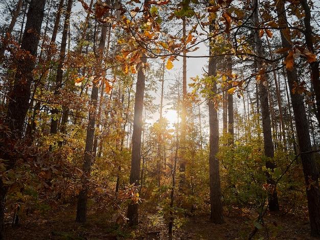 La luce del sole tra gli alberi nella foresta.