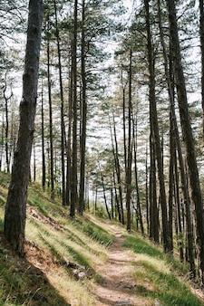 Sentiero nel bosco illuminato dal sole lungo il pendio tra alberi ad alto fusto