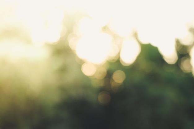 Fondo verde astratto soleggiato della natura, parco della sfocatura con luce del bokeh, natura, giardino, stagione primaverile ed estiva