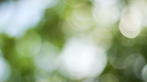 Soleggiato sfondo verde astratto della natura, parco sfocato con luce bokeh, natura, giardino, stagione primaverile ed estiva