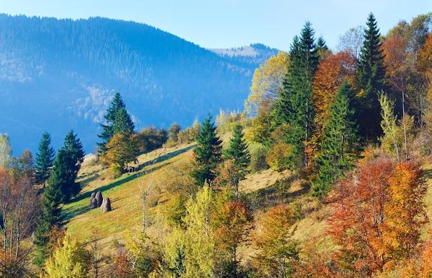 Soleggiato bosco di montagna autunnale sul fianco di una montagna (carpazi, ucraina)