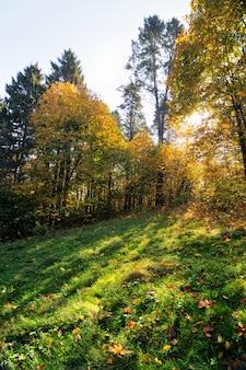 Soleggiato bellissimo paesaggio autunnale di foglie gialle