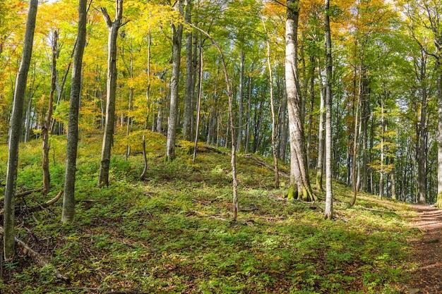 Giornata di sole nella foresta di autunno