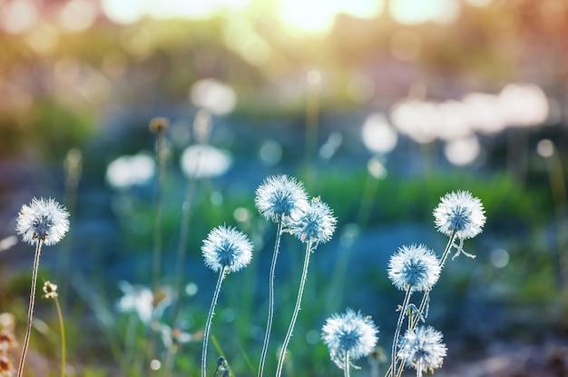 Giornata di sole sul prato dei fiori.