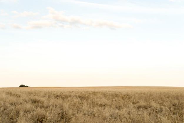 Paesaggio soleggiato di un campo di grano Foto Premium