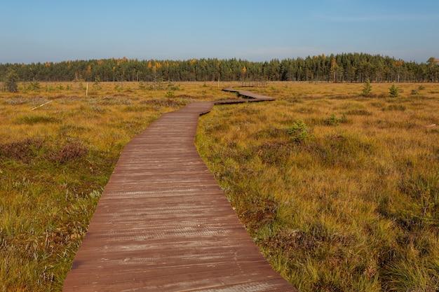 Panorama soleggiato con il sentiero in legno attraverso la palude fino alla foresta all'orizzonte.