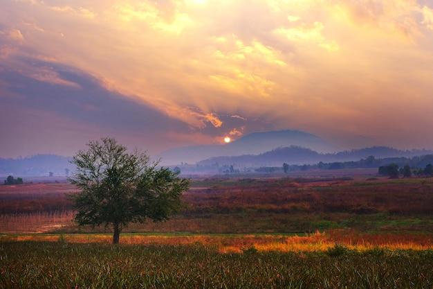 Alba bellissimo cielo al tramonto di colori giallo arancio e blu per lo sfondo.
