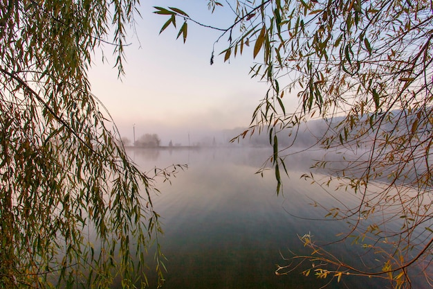 Alba sul lago nebbioso. canne in primo piano sulla costa del lago. il sole sta sorgendo sopra gli alberi sull'ulteriore sponda del fiume.
