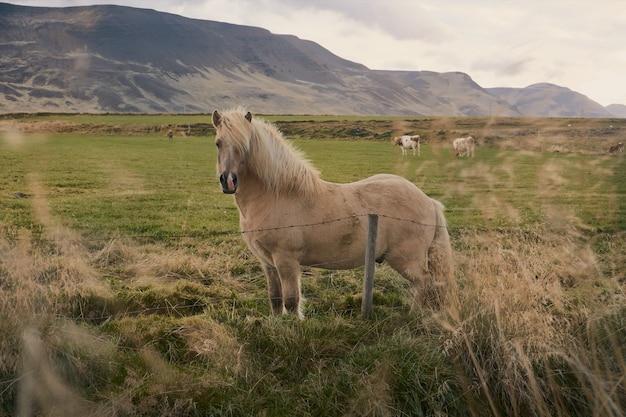 Paesaggio di alba con cavalli su prati verdi e montagne