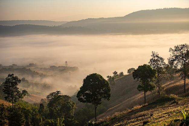 Fondo della montagna della copertura della foschia di alba alla foresta nebbiosa del paesaggio di inverno della campagna