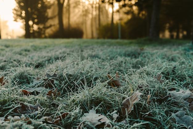 Alba nel parco e nebbia, l'inizio dell'inverno, primi piani sull'erba ghiacciata